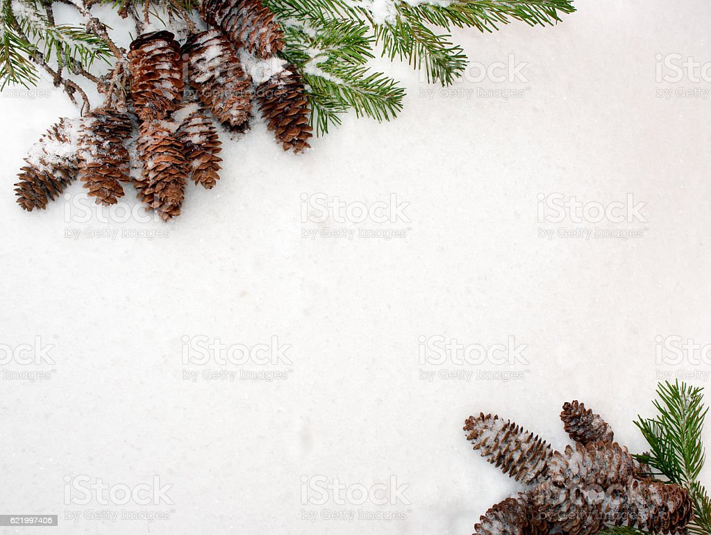 Christmas snow background. Spruce branches and cones, opposite each other. stock photo