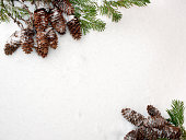 Christmas snow background. Spruce branches and cones, opposite each other.