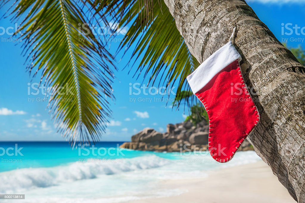 Christmas sock on palm tree at exotic tropical beach stock photo