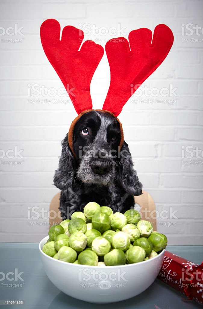Christmas sprouts royalty-free stock photo