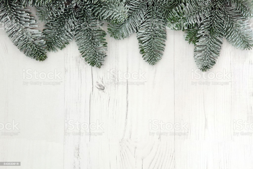 Christmas Spruce Fir Background stock photo