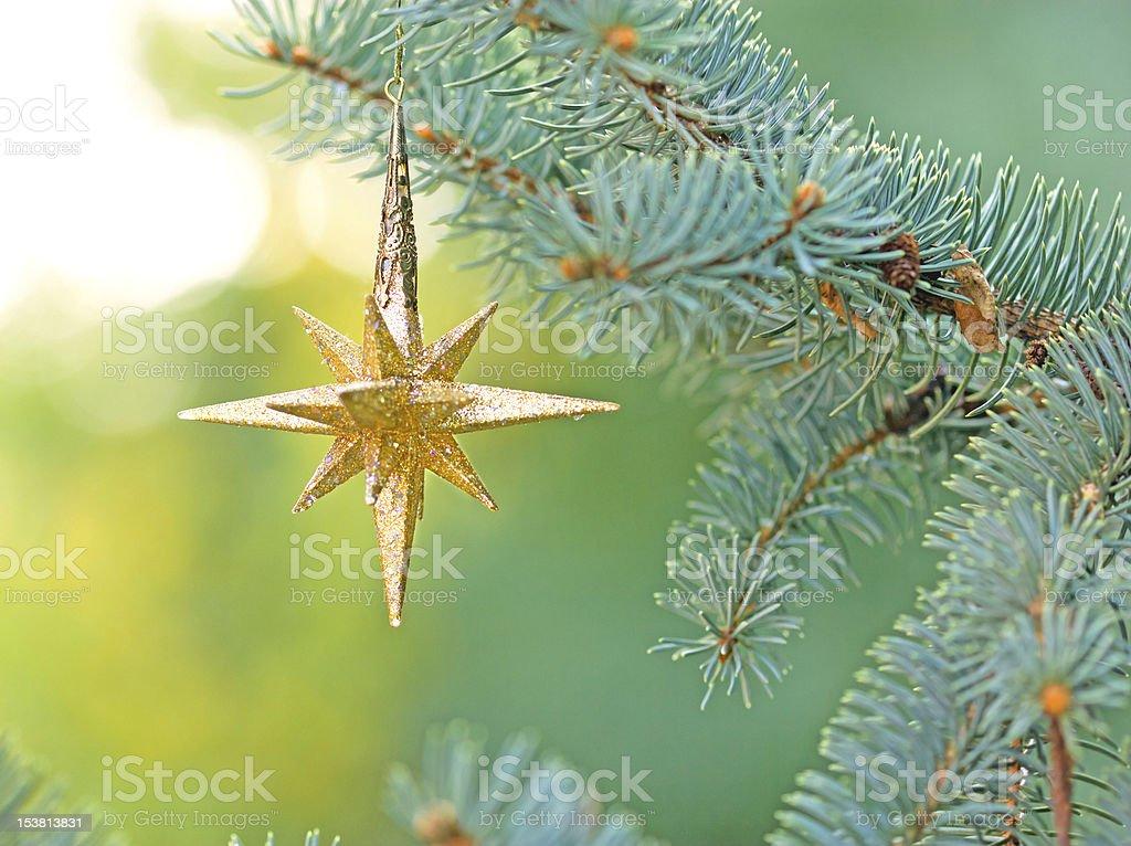 Christmas star on pine tree stock photo