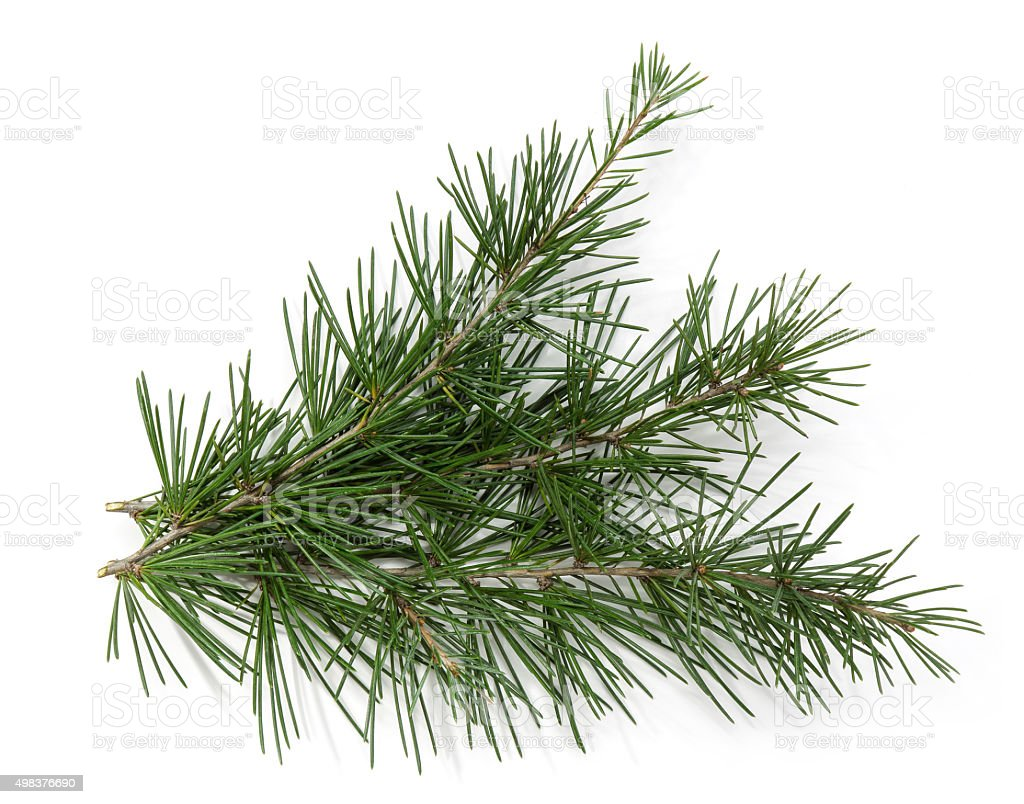 Christmas Theme Background Frame, pine branch stock photo