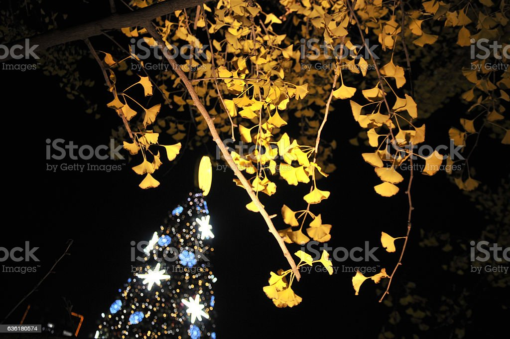 Christmas tree and Ginkgo leaf stock photo