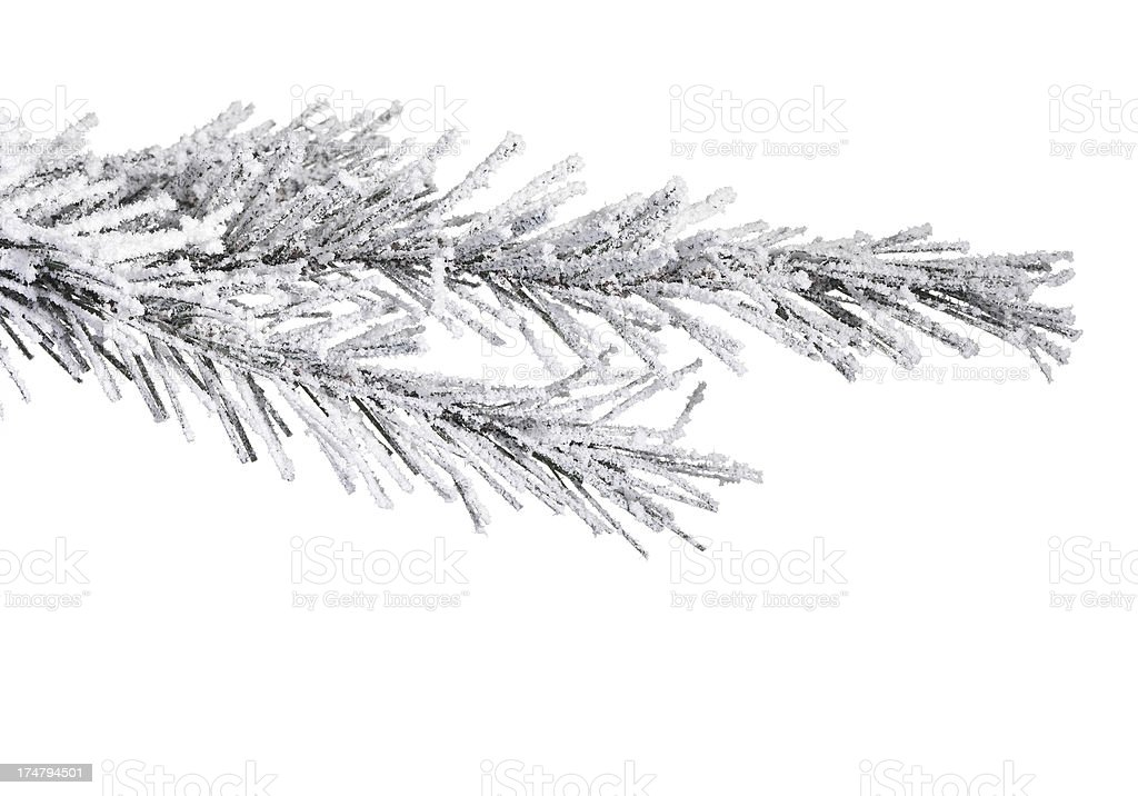 Christmas tree and snow royalty-free stock photo
