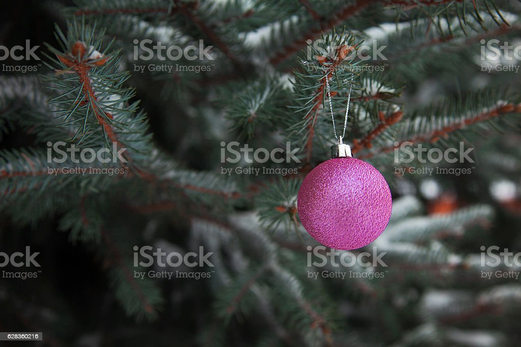 Christmas Tree Balls on branch of royalty-free stock photo