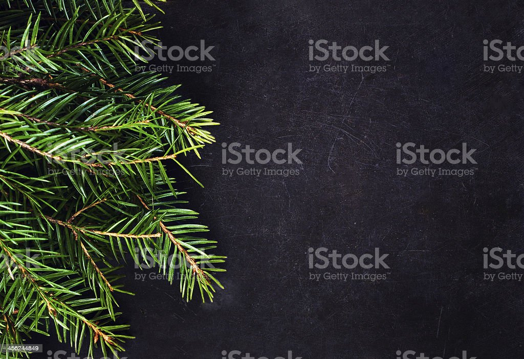 Christmas Tree Branch on Blackboard with copy space for greeting stock photo