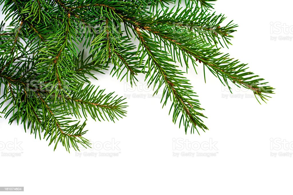 Christmas tree branch or garland royalty-free stock photo