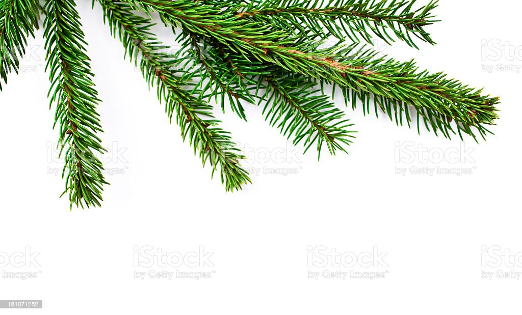 Branch Christmas Tree christmas tree branch stock photo 181071252 | istock
