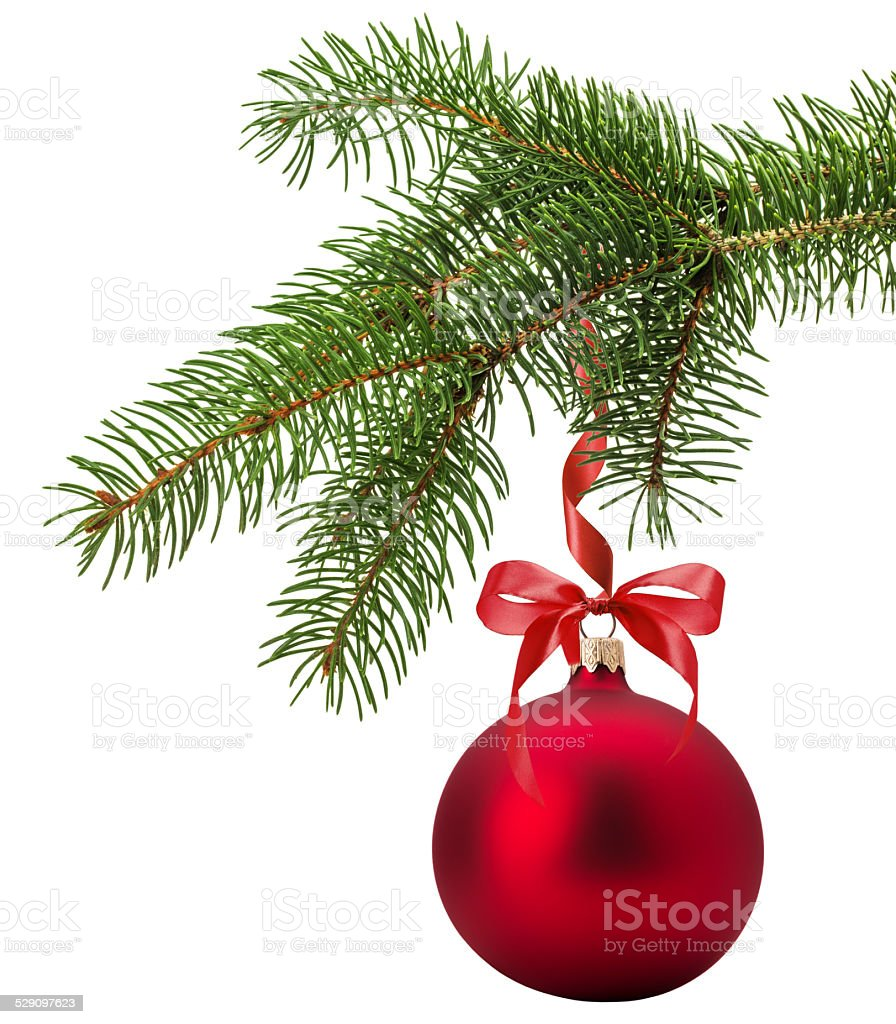 Christmas tree branch with red ball stock photo