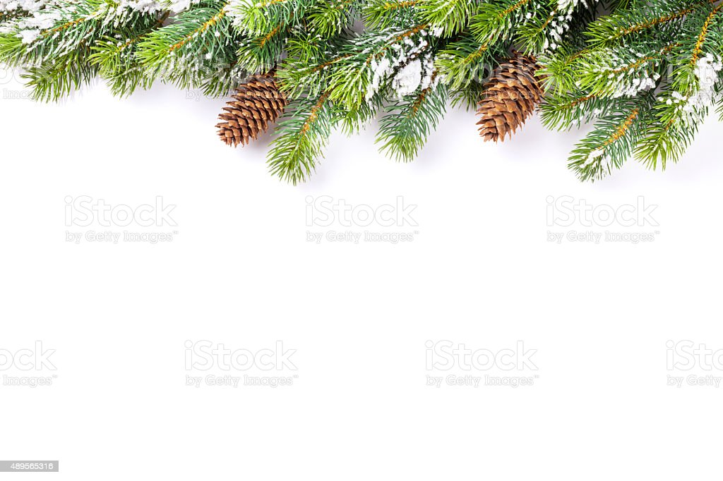 Christmas tree branch with snow and pine cones stock photo