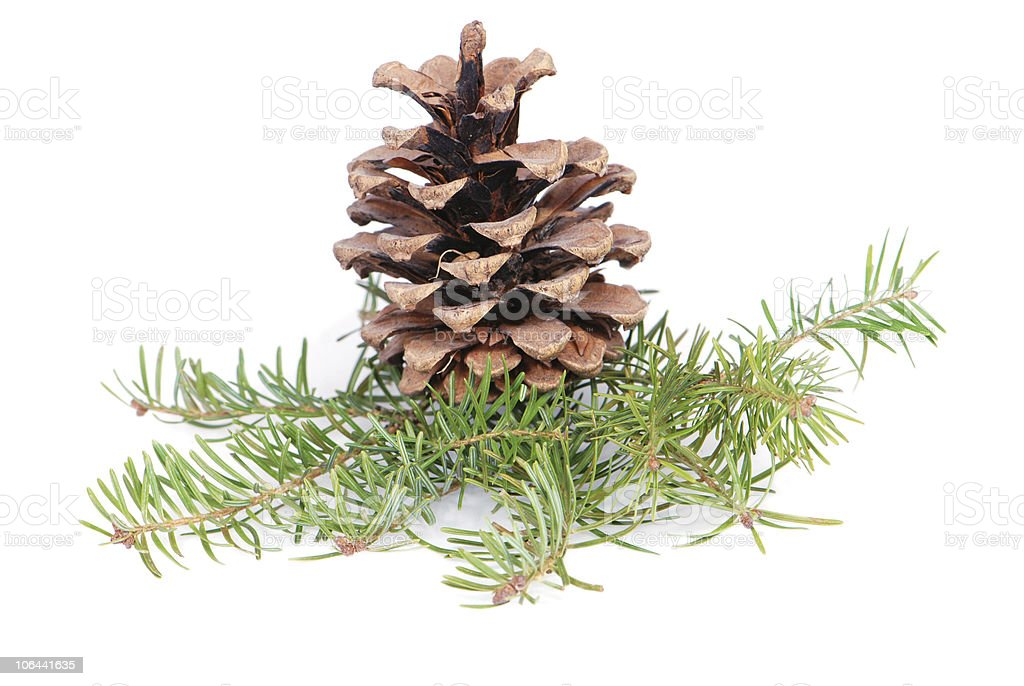 Christmas tree branches and cone stock photo