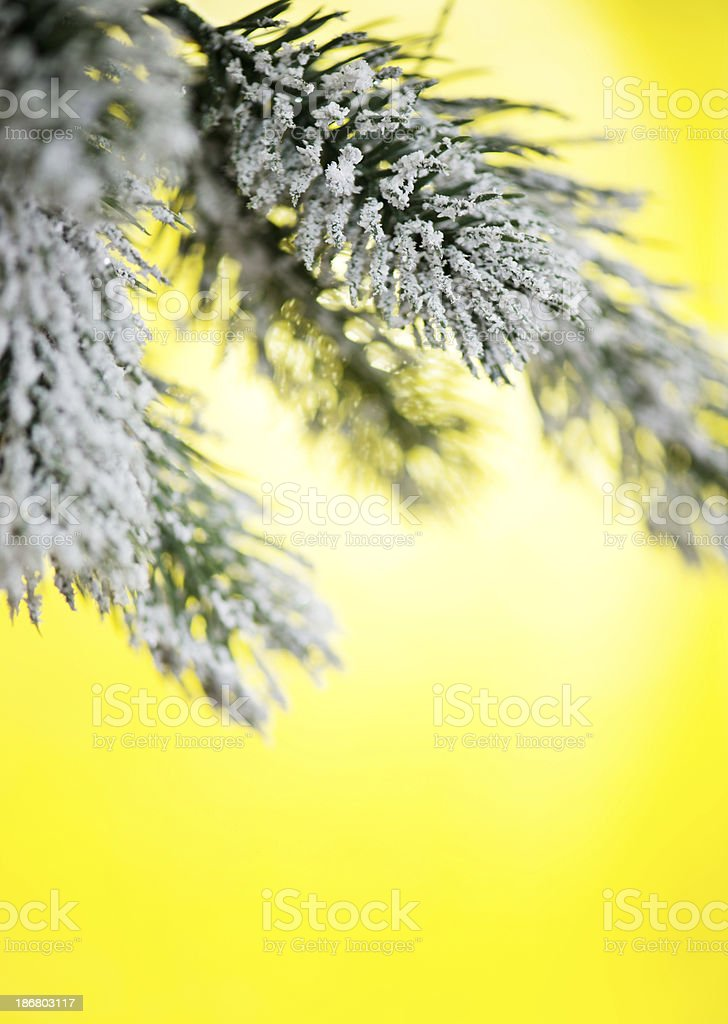 Christmas Tree Branches royalty-free stock photo