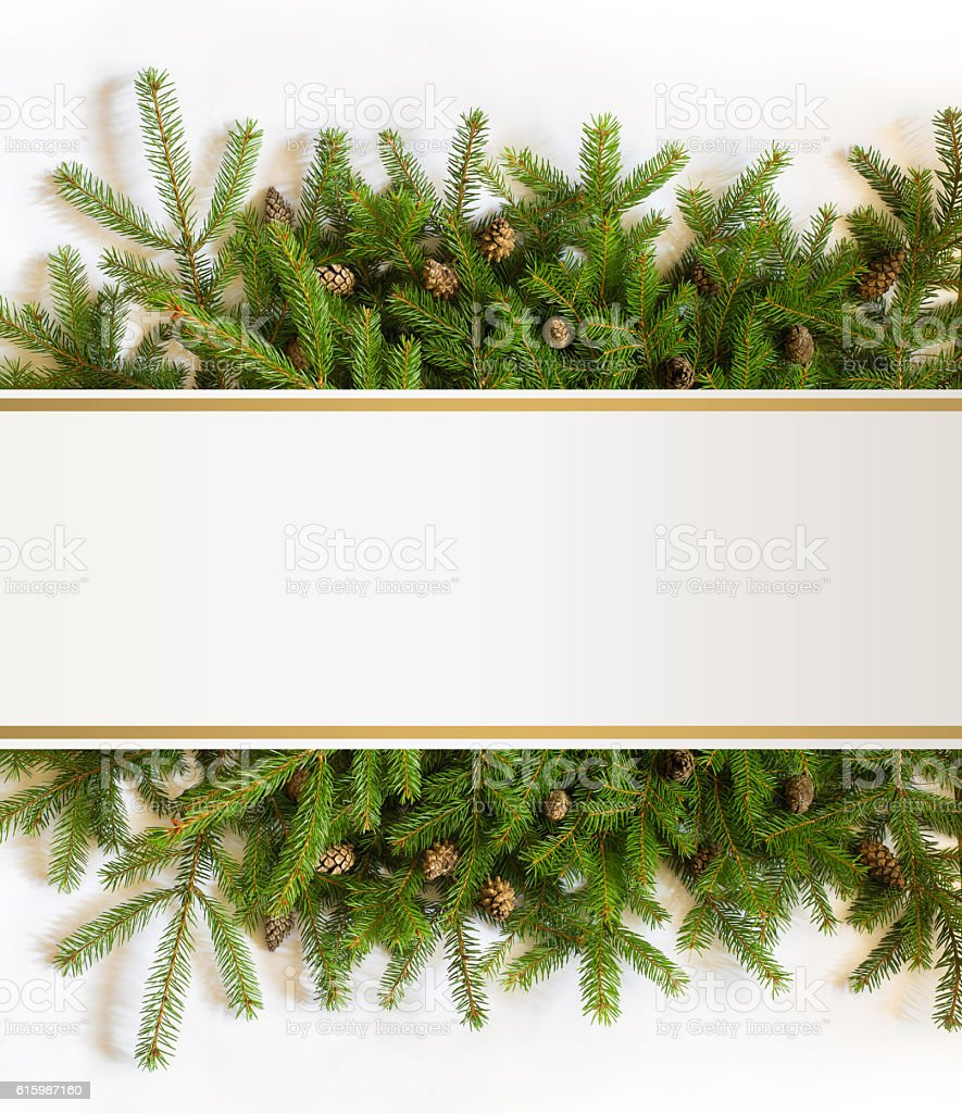 Christmas tree branches stock photo