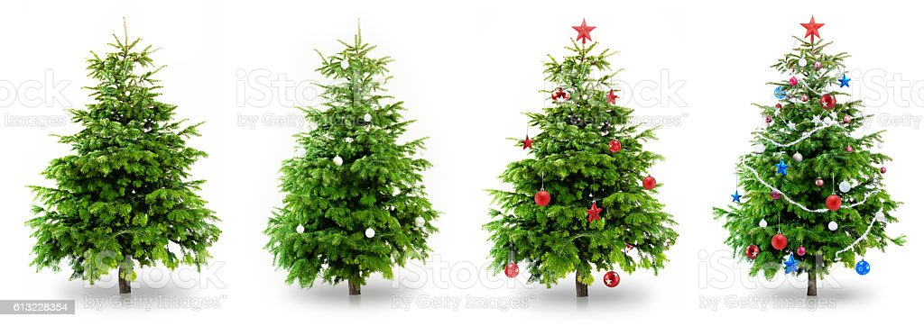 Christmas Tree Collection stock photo
