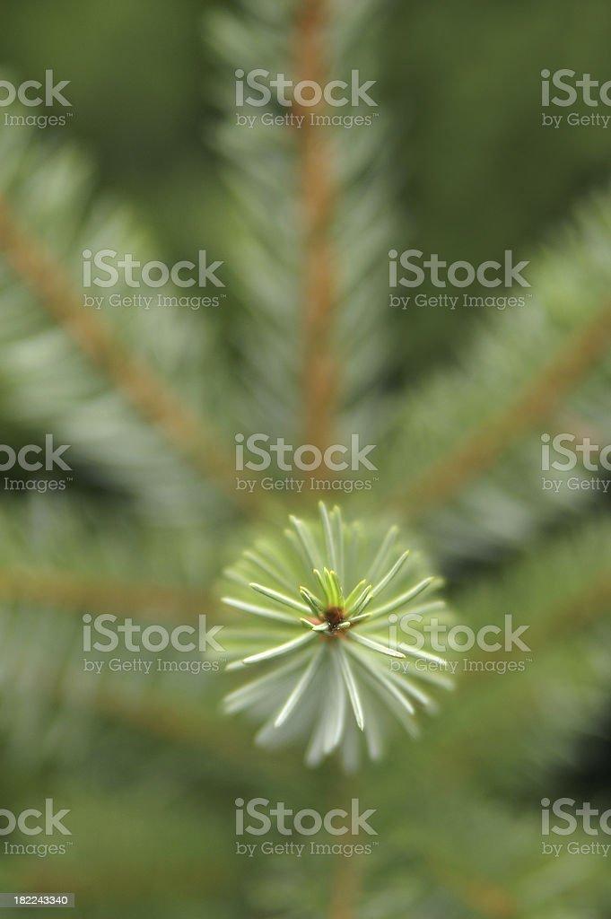 Christmas tree details stock photo
