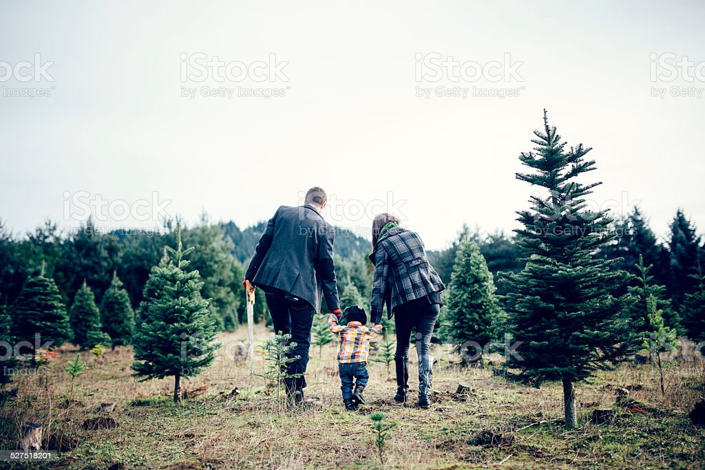 Christmas Tree Family at Tree Farm stock photo