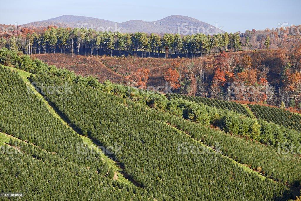 Christmas Tree Farm in Autumn, North Carolina, USA royalty-free stock photo