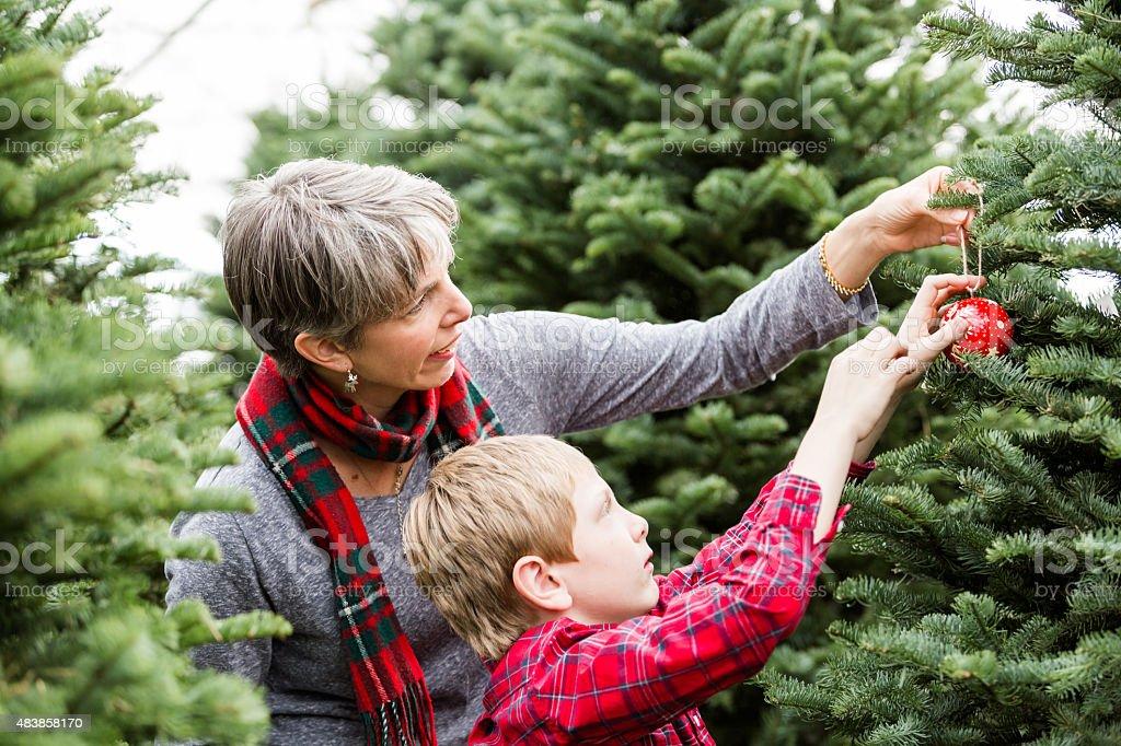 Christmas tree farm stock photo