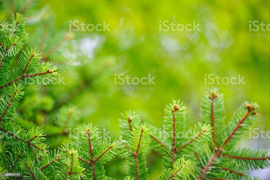 Christmas tree frame royalty-free stock photo