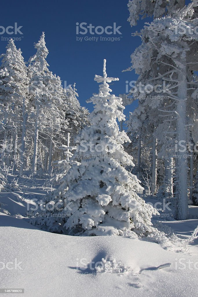 Christmas tree in a snowy winter landscape royalty-free stock photo