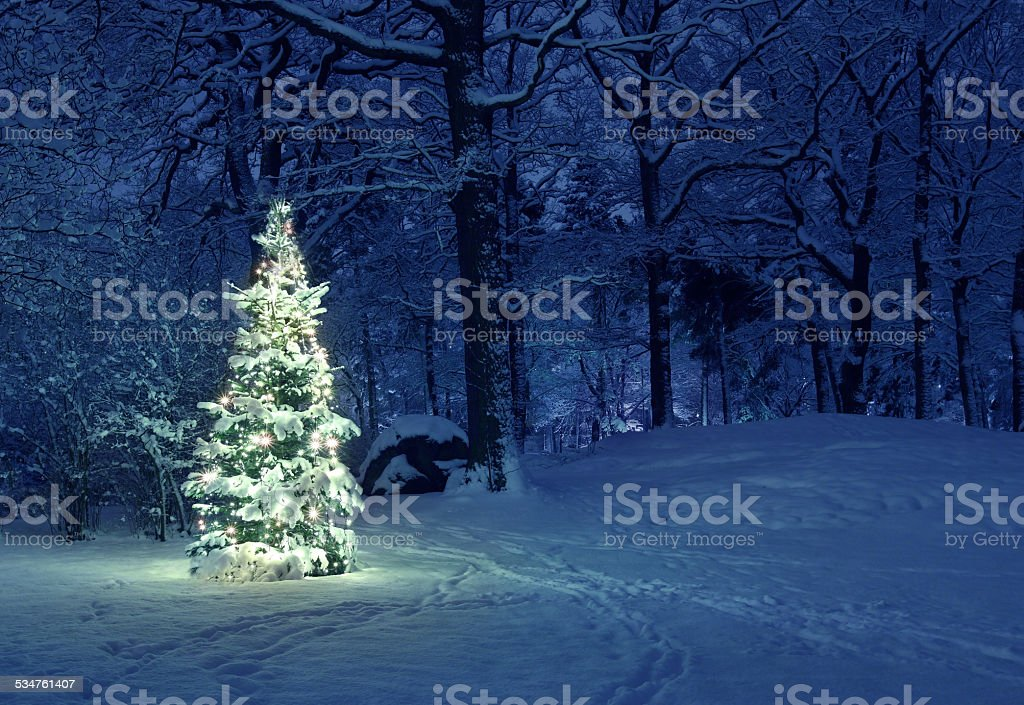 Christmas Tree in Snow stock photo