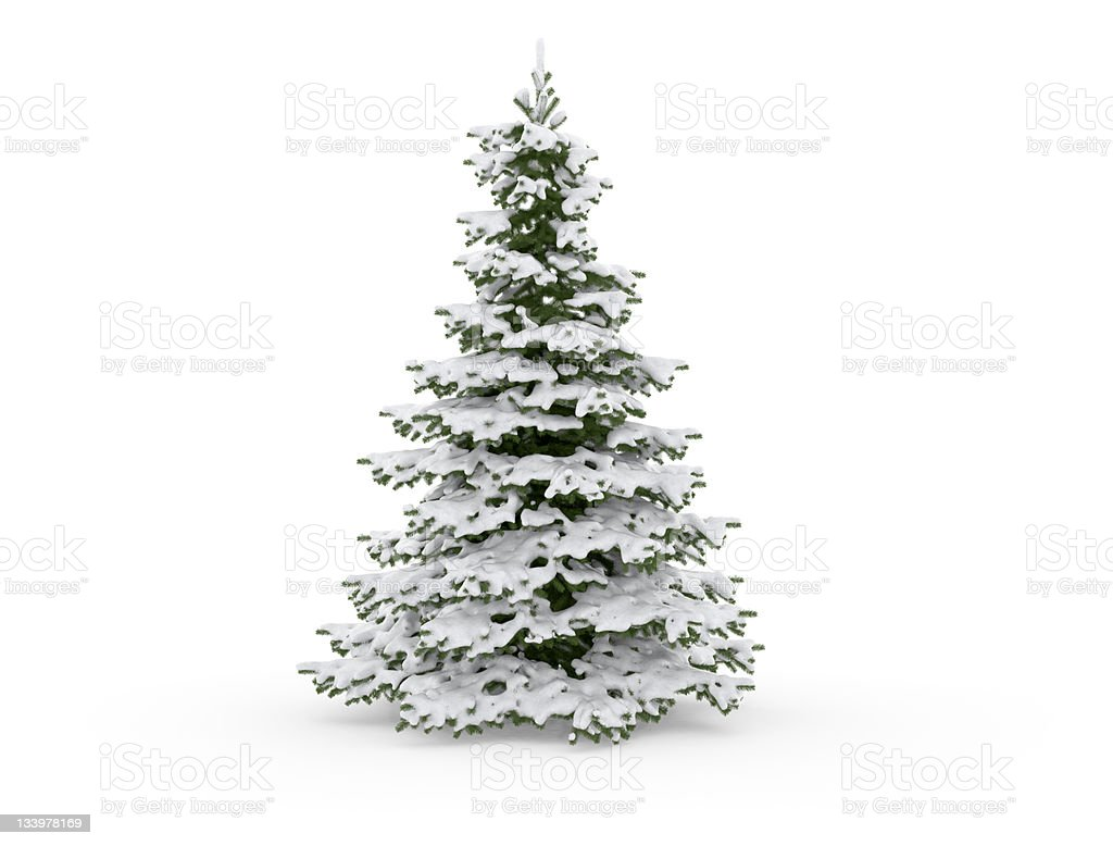 Christmas Tree Isolated on White with Snow stock photo