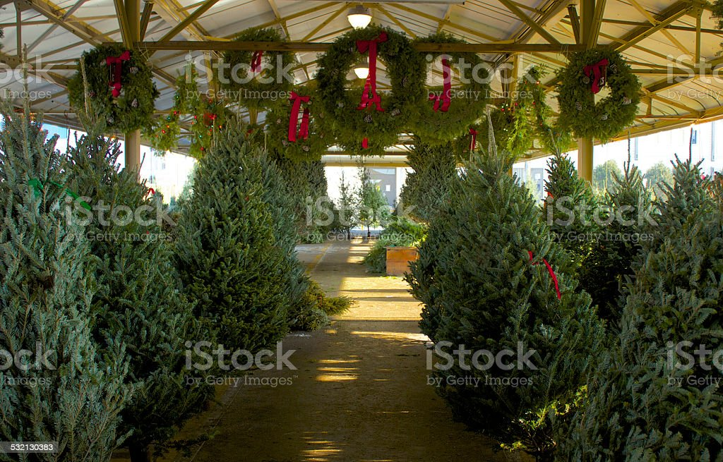 Christmas Tree  lot stock photo