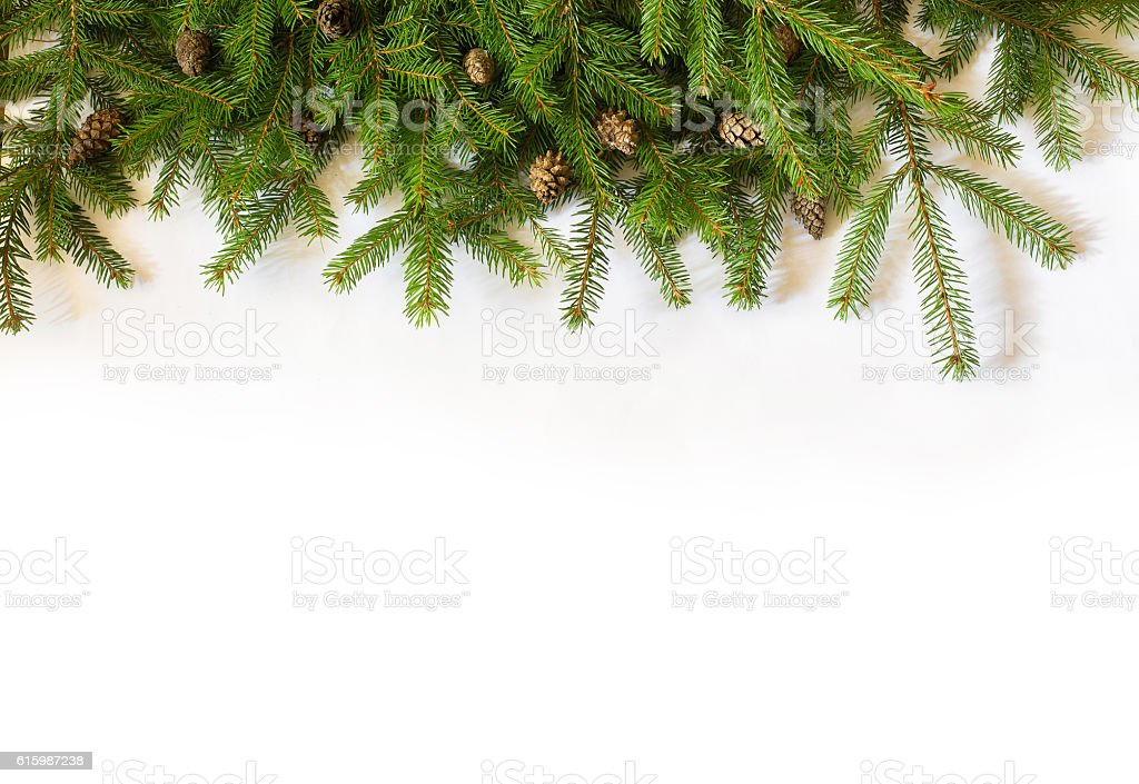 Christmas tree on white background stock photo
