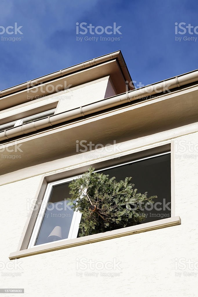 Christmas tree out the window royalty-free stock photo