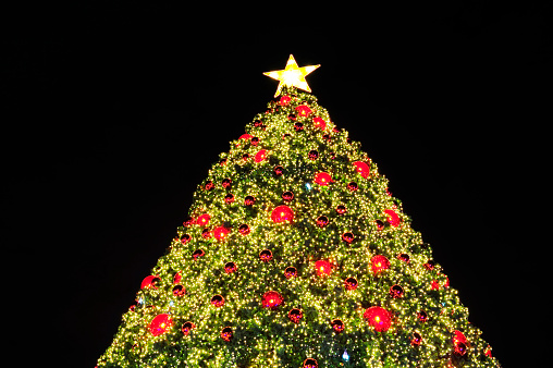 Outdoor Christmas Trees Pictures Images And Stock Photos