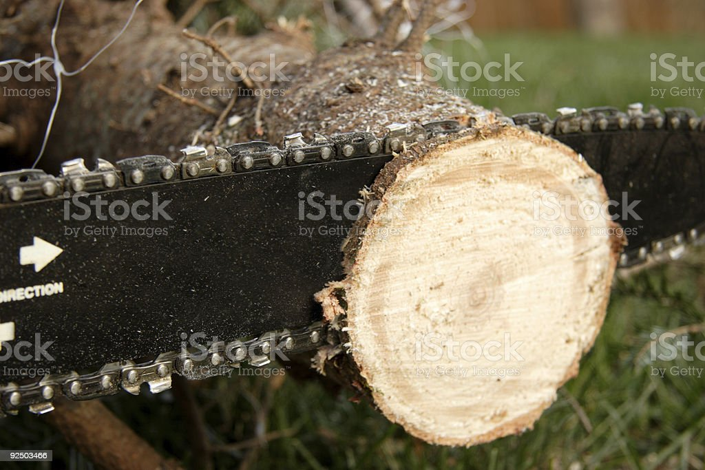 christmas tree prep royalty-free stock photo