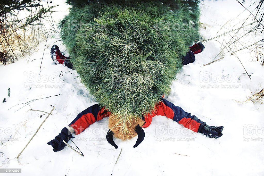 Christmas Tree Problems royalty-free stock photo