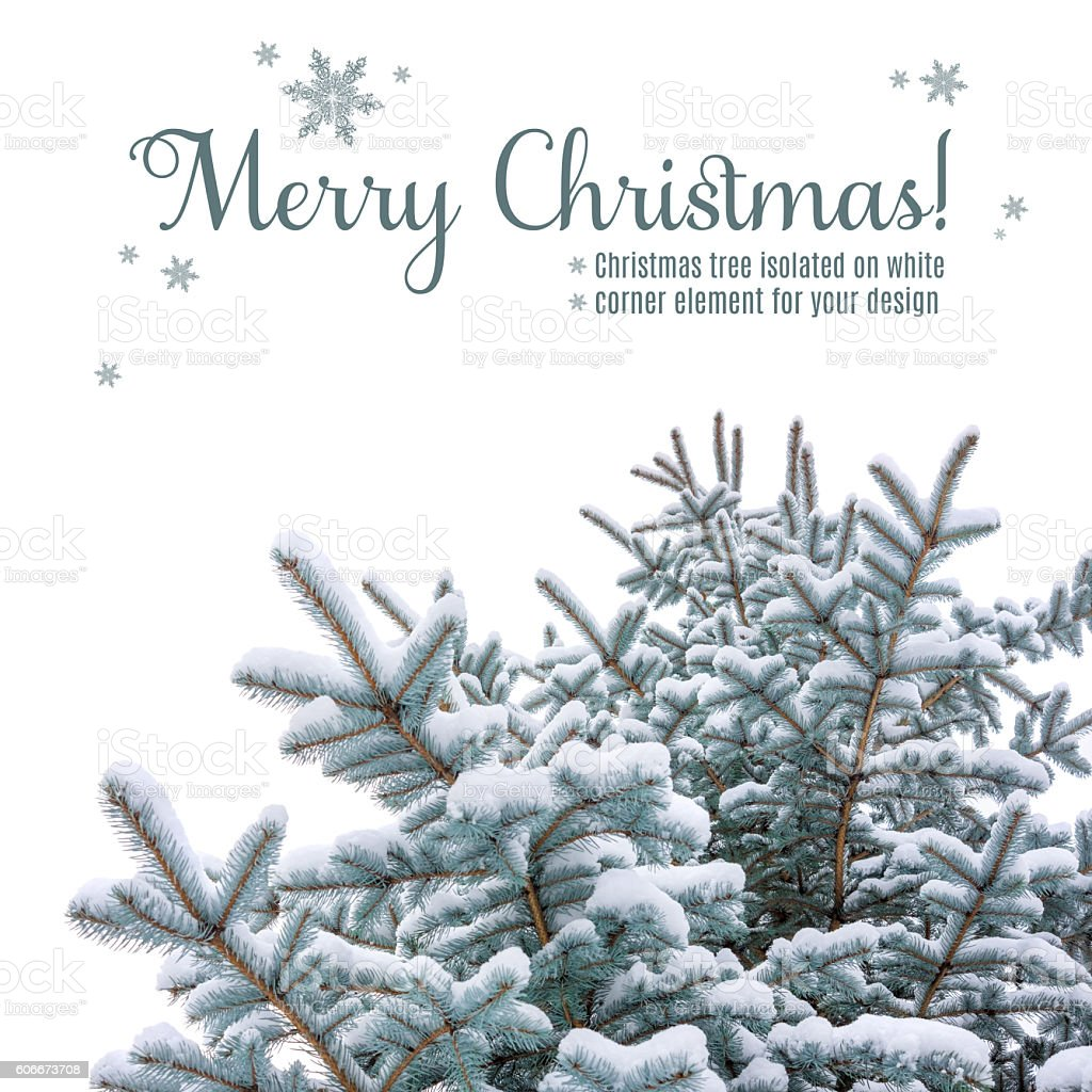 Christmas tree under snow, corner element on white stock photo