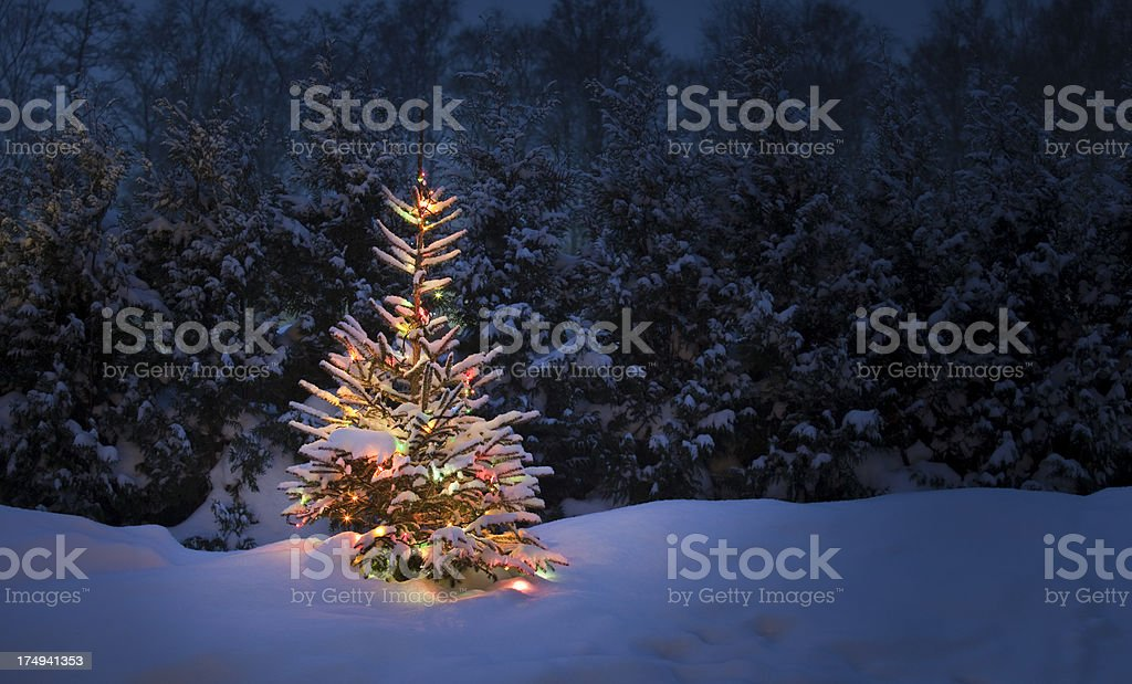 Christmas tree with fresh and fluffy snow stock photo