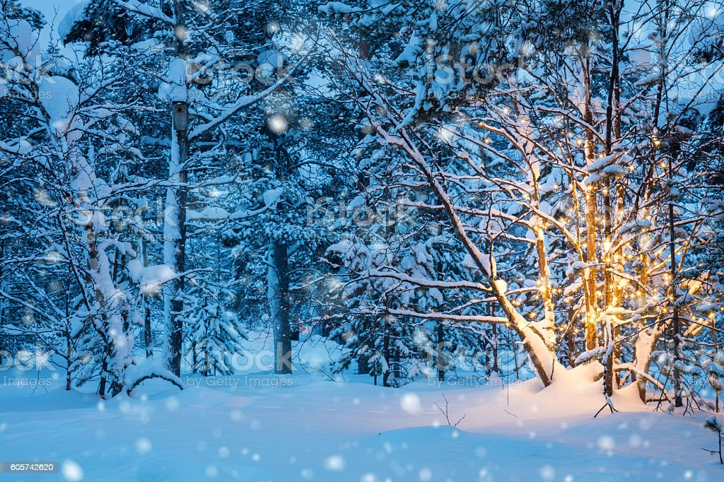 Christmas tree with garland lights and snow in winter forest stock photo