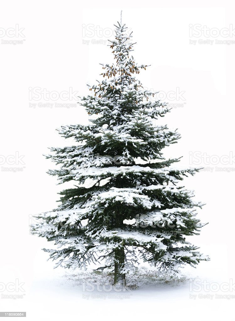 Christmas tree with snow on firs royalty-free stock photo