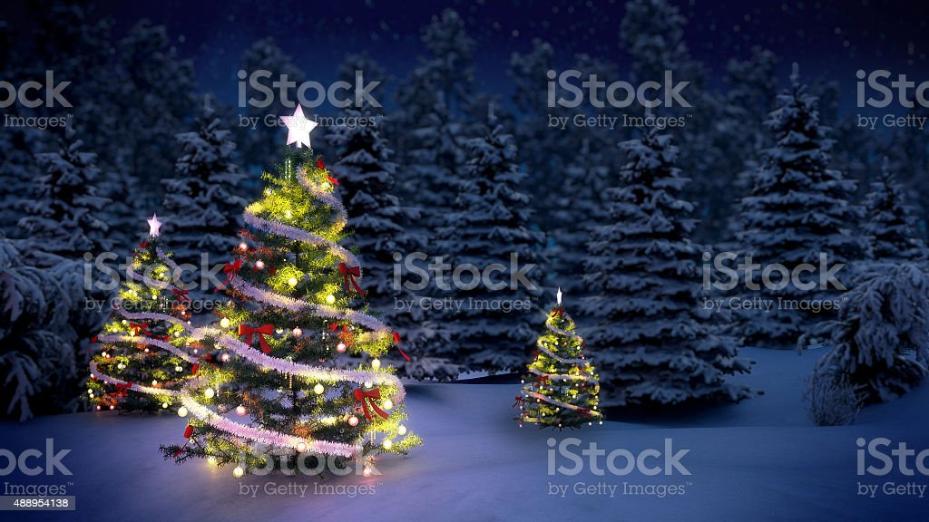Christmas trees in forest stock photo