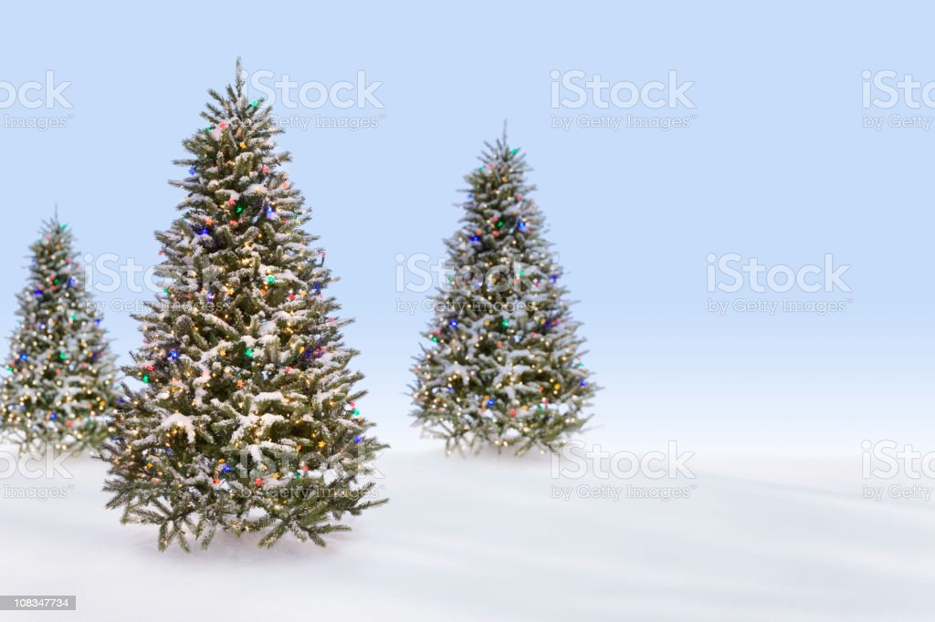 Christmas Trees in the Snow royalty-free stock photo
