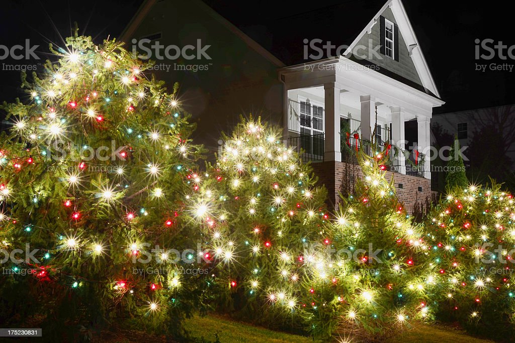 Christmas Trees stock photo