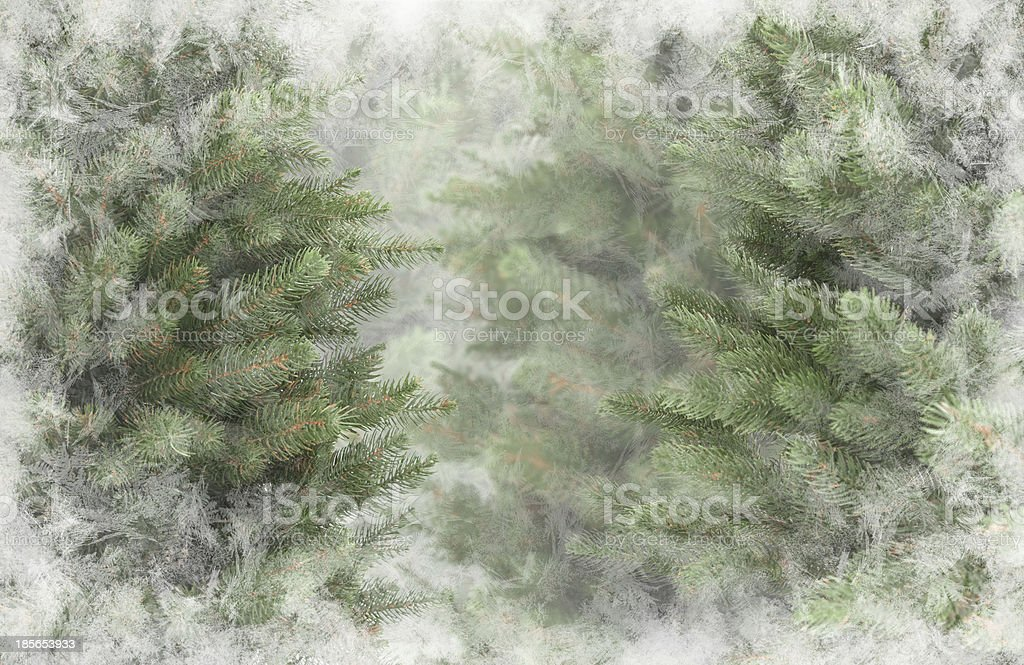 Christmas trees royalty-free stock photo