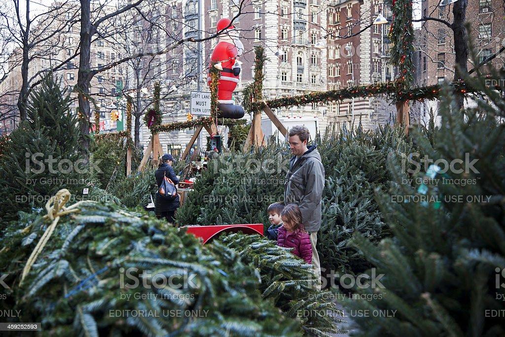 Christmas trees # 1 XXXL royalty-free stock photo
