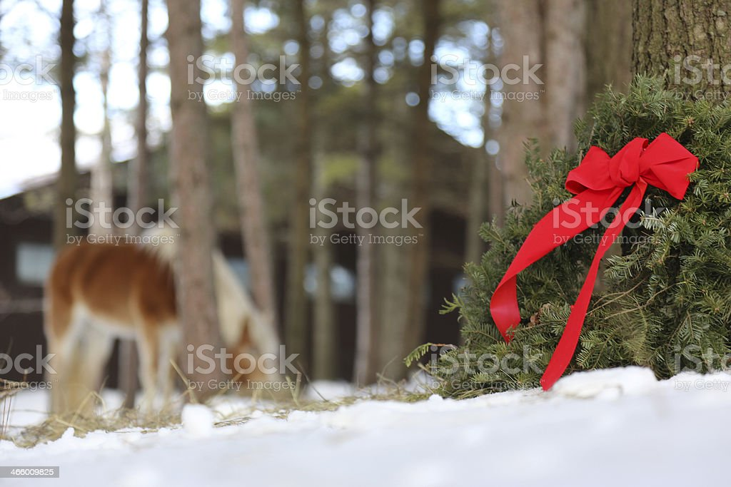 Christmas wreath on a farm with horse in the background royalty-free stock photo