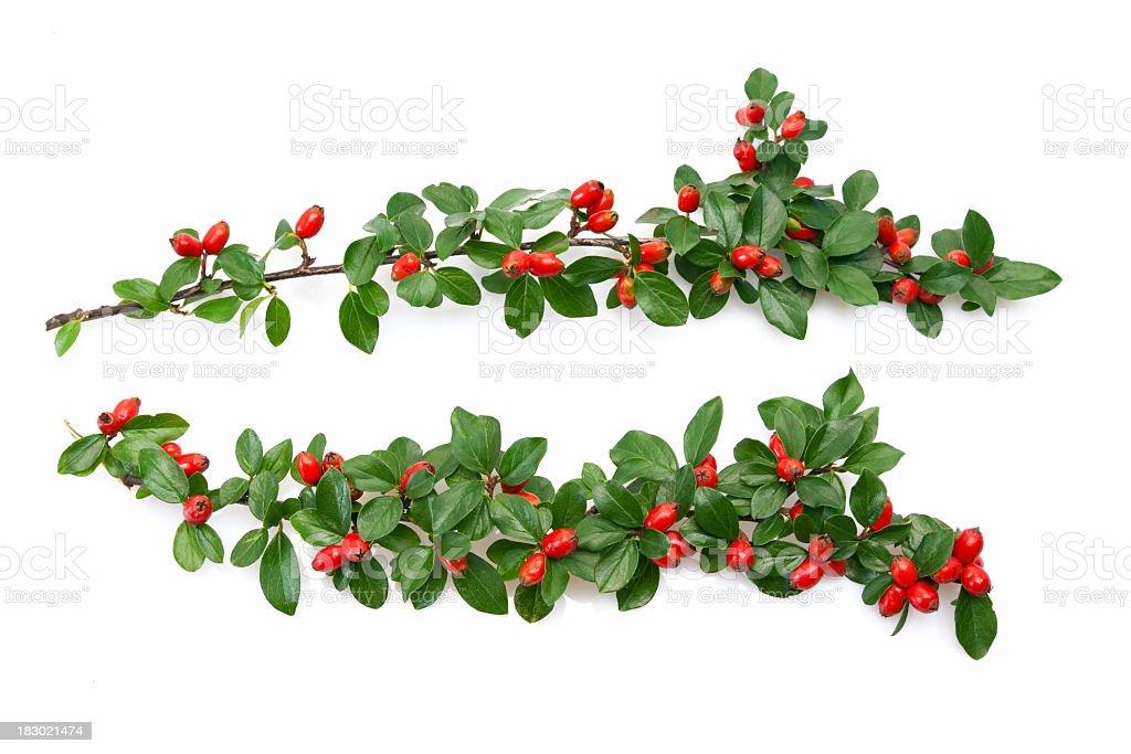Christmass twig royalty-free stock photo