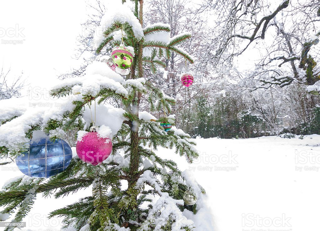 Christmast balls in garden covered with snow stock photo