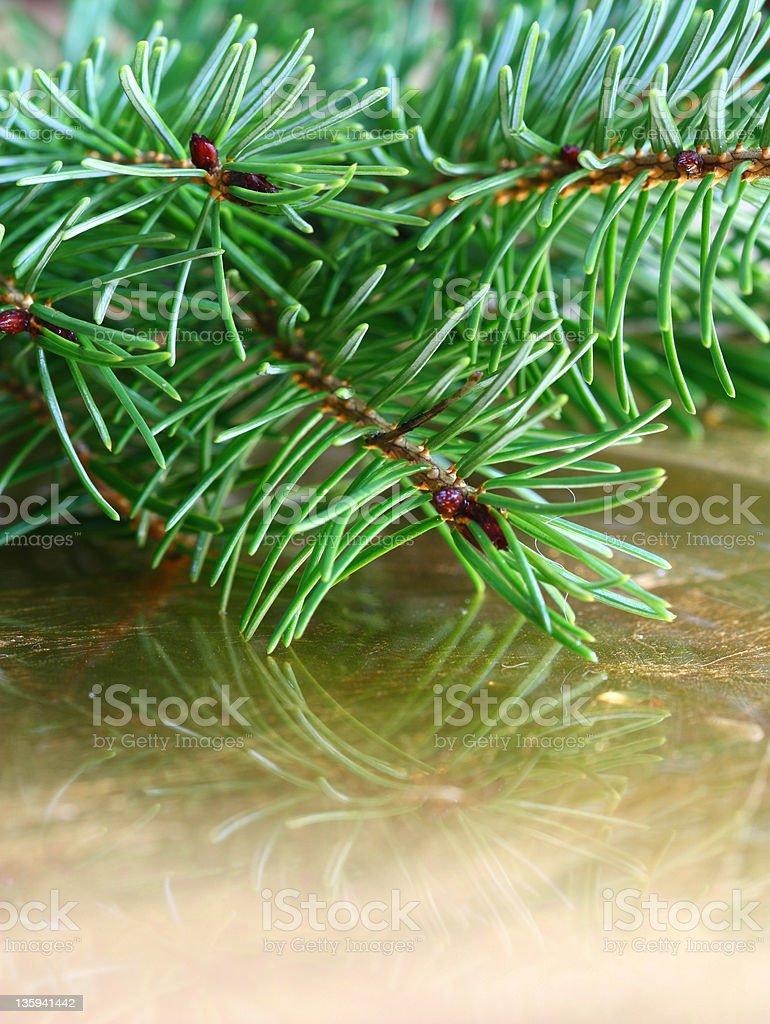 Christrmas fir stock photo