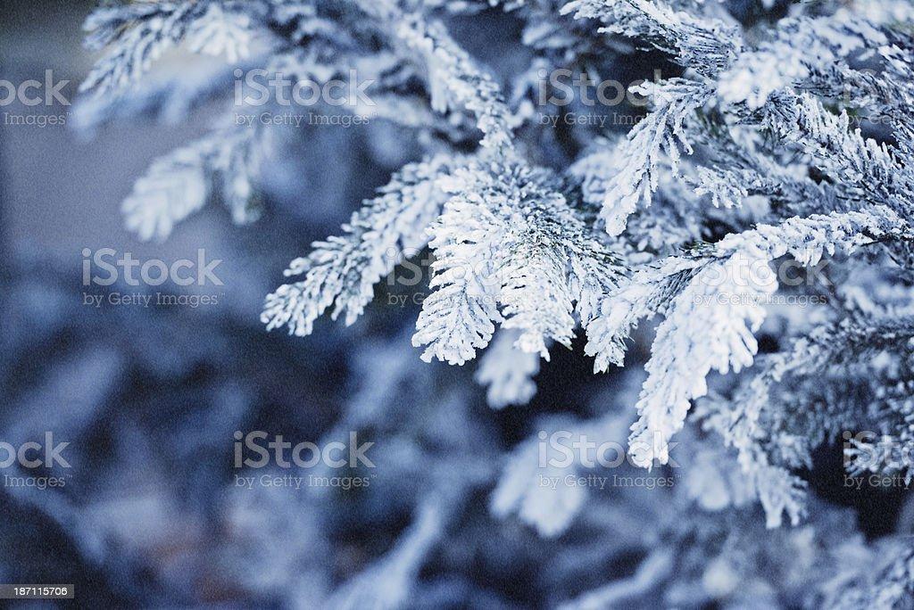 Chritsmas tree in snow stock photo