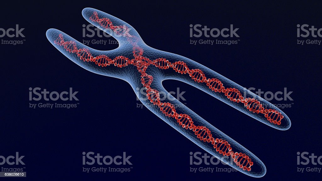 X chromosome . 3D render stock photo