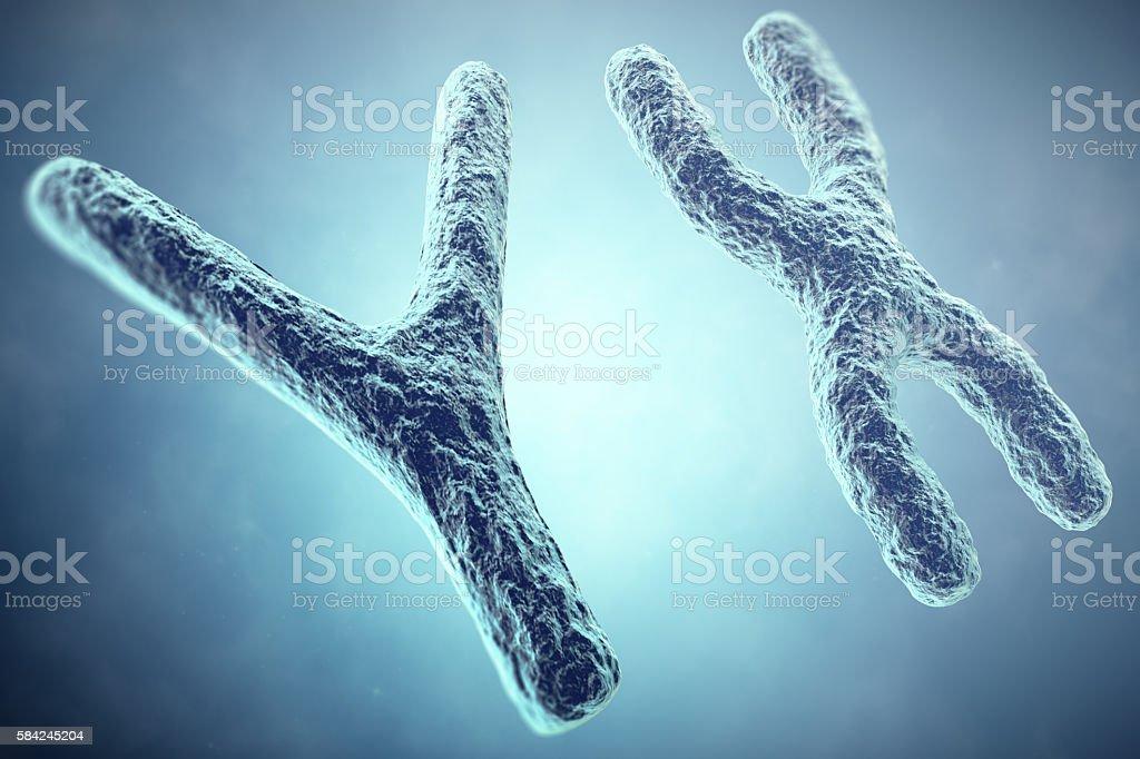 XY Chromosome concept. Male Heterogametic Sex. 3d illustration stock photo