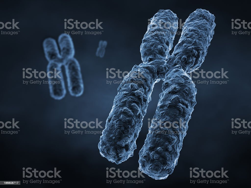 Chromosome royalty-free stock photo